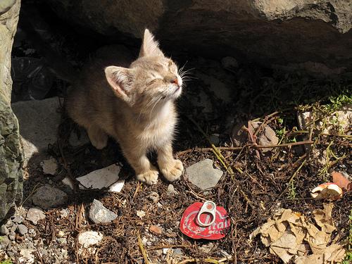 Chats abandonnés dans les rues de Montréal (2/4)