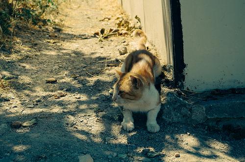Chats abandonnés dans les rues de Montréal (4/4)