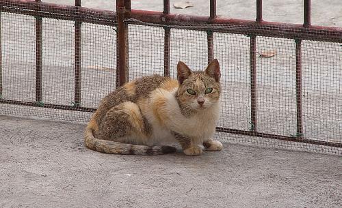 Chats abandonnés dans les rues de Montréal (3/4)